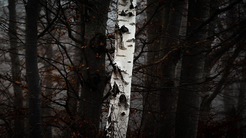 #07. Björken, fotograf Johan Blomqvist